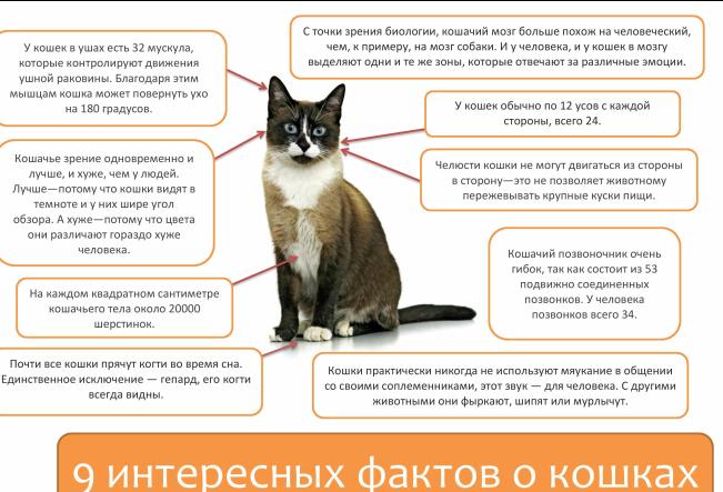 Новости - Интересные факты о животных.